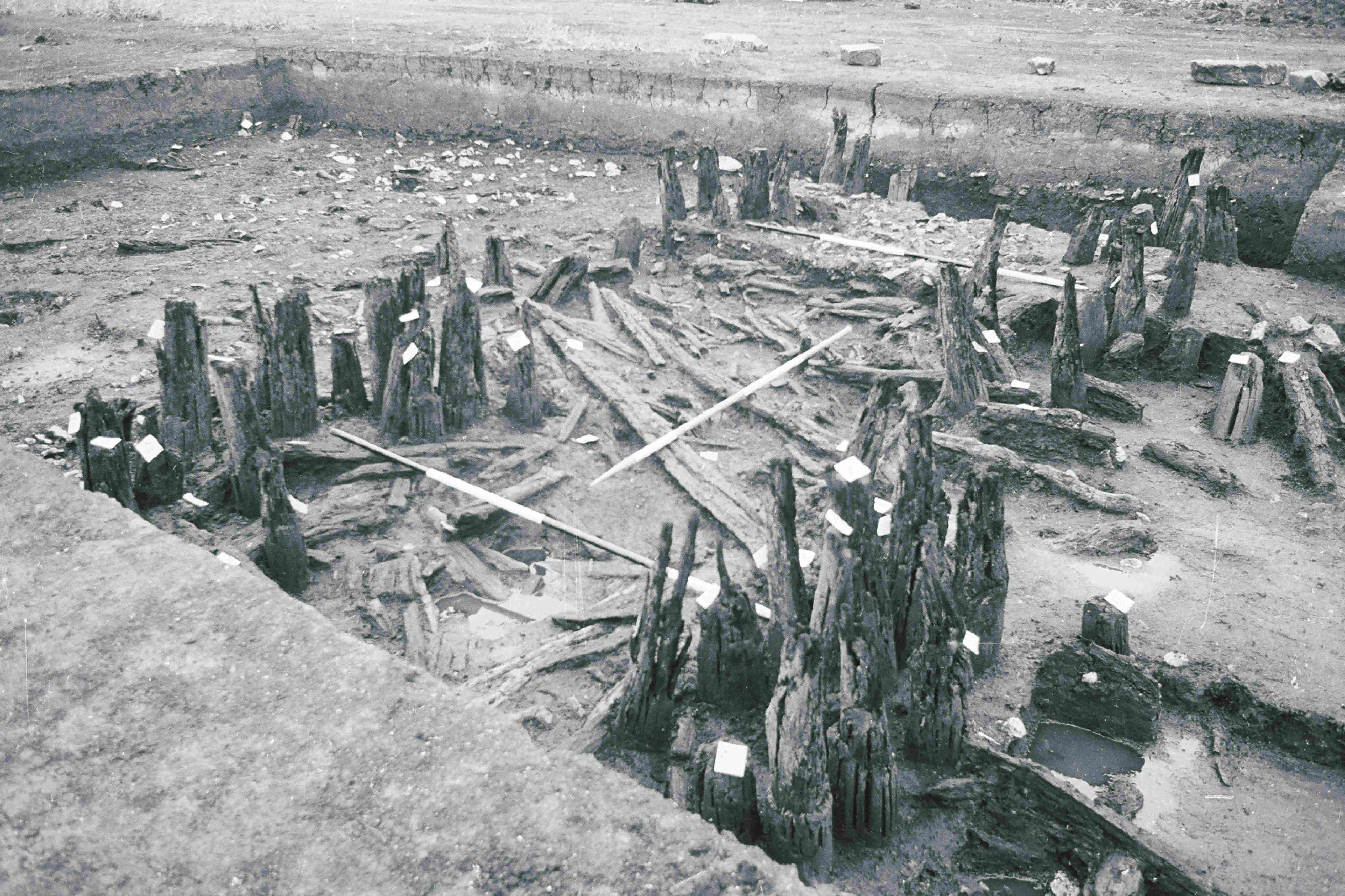 A black and white photograph of a large archaeological excavation showing a clearly defined wooden structures extending across the trench. Wooden uprights extend in two parallel rows, with extensive wooden debris between them.
