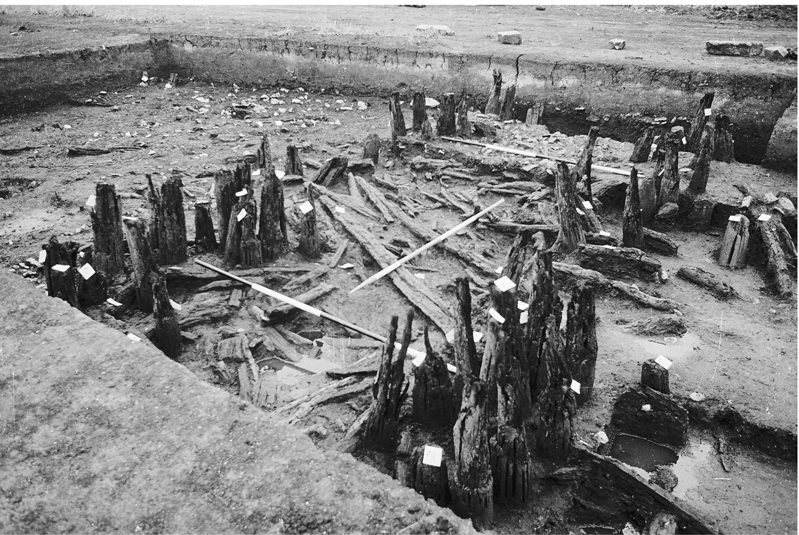 A black and white photo of an archaeological excavation. A trench contains two clearly defined rows of upright wooden posts in states of decay and disintegration. Between the two rows are scattered planks and wooden debris.