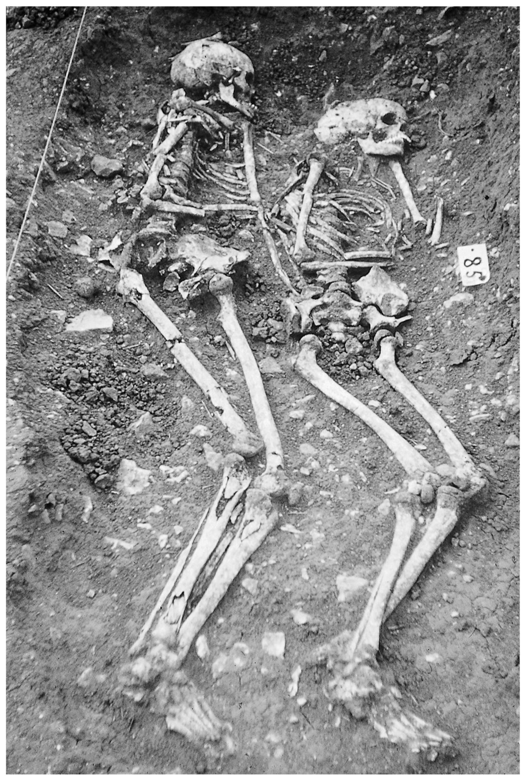 A black and white photo of an archaeological excavation. Two skeletons are shown next to each other, lying on their left hand sides.