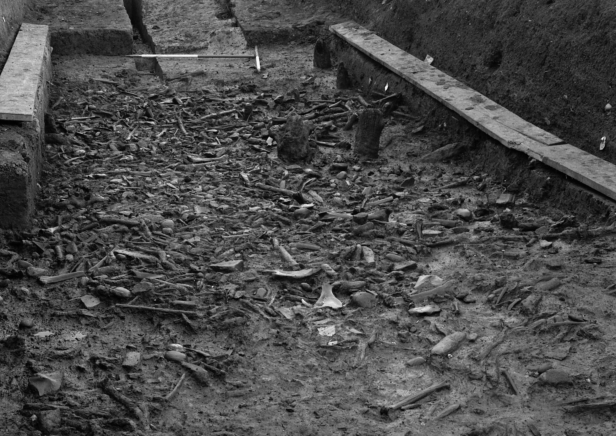 A photo of an archaeological excavation, the bottom of which is very densely littered with debris.