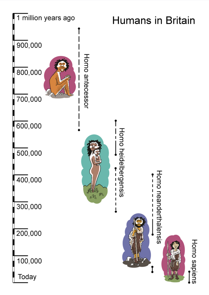 Timeline showing past human occupation in Britain.