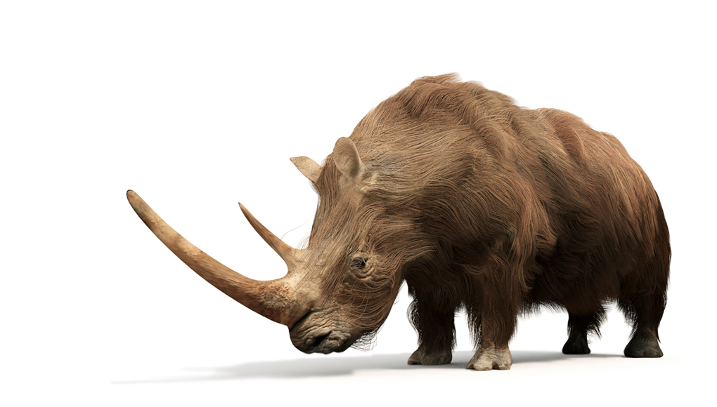 Reconstruction of a Woolly Rhinoceros (by Pighill Reconstruction).  Rhino is one of the most frequent fossil finds in the county.